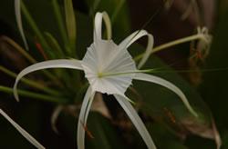 Flora of Phuket, Thailand.