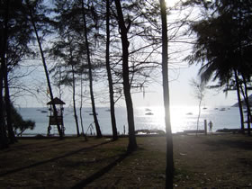 The picnic and BBQ area @ Nai Harn Beach has wonderful Fir shade trees that tower over the beach.